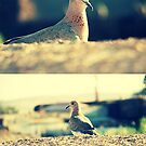 curious dove by Th3rd World Order