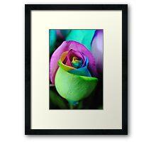 Rainbow Roses 6 Framed Print