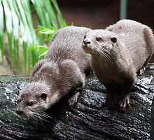 Otters by LittleRog