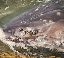 Looking Into The Eye Of The Sturgeon by Thomas Young