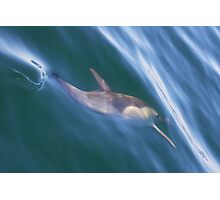 dolphin glide Photographic Print
