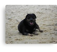 Rotti in the sand Canvas Print