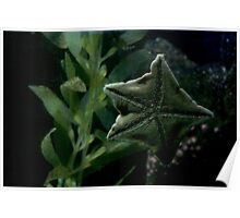 Starfish Holding On Poster
