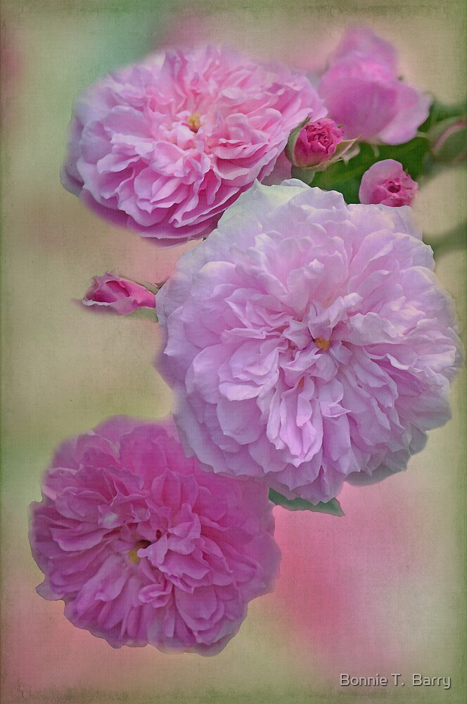Vintage Caldwell Roses by Bonnie T.  Barry