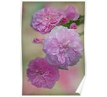 Vintage Caldwell Roses Poster
