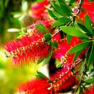 Bottle Brush Tree by Hope Ledebur