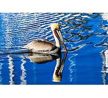 Brown Pelican in Harbor Photographic Print