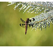 Dragonfly by j4y00078