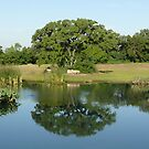 Reflection of a Texas Oak Tree  by Jack McCabe