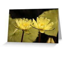 Yellow Water Lilies and Damselfly Greeting Card