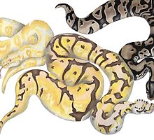 Ball Pythons Pencil Drawing by LizardSpirit