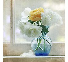 White and yellow roses Photographic Print