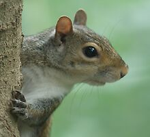 Portrait of a Squirrel by noffi