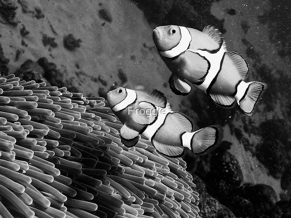 Nemo 1 by Gerard Rotse