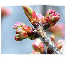 Spring Buddings Poster