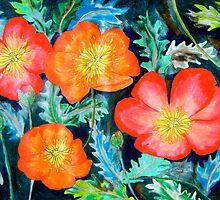 Poppies by Alexandra Felgate