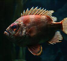 Not A Clown Fish by Lita Medinger