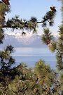 """A Peek Through The Pines"" by Lynn Bawden"