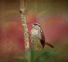 Wren in the Rose Garden by Bonnie T.  Barry