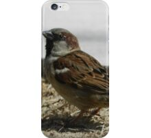 A Bird With a Twinkle in His Eye... iPhone Case/Skin