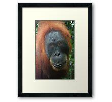 Mother Orangutan Framed Print