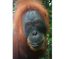 Mother Orangutan Photographic Print