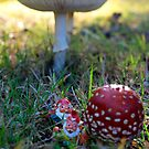 Gnomes wending way through Fly Agaric jungle by Bev Pascoe