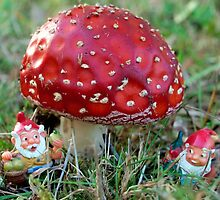 Fly Agaric home of Gnomes by Bev Pascoe