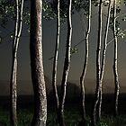 landscape before midnight 2 by Andraž Jenkole