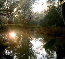 King River Morning by Vanessa Brady