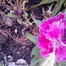 Purple Flowers x by Ruby Adams
