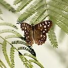 Speckled Wood by AnnDixon