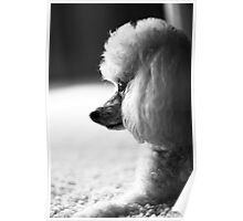 Profile of a Poodle Poster