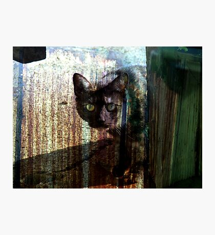 The cat with no trust Photographic Print