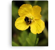Yellow Poppy and Bumble Bee Canvas Print