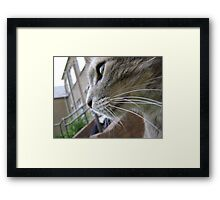 Earl's Patch Framed Print