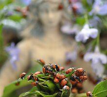 Ladybug Dreams  by Judy Grant