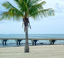 Palm Tree and Pier by Colleen Drew