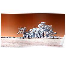 Trees ~ Infrared HDR 'Tilt-shift' Panorama Poster