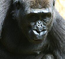 Western Lowland Gorilla by Wayne Gerard Trotman