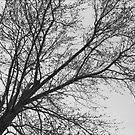Tree by dylangould