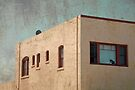 Window Cat by Kevin Bergen