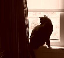 Sepia Cat by Godzilla725
