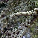 Spider's web by David Clarke