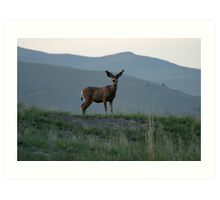 White Tail Buck on theBison Range Art Print
