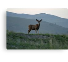 White Tail Buck on theBison Range Canvas Print