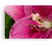 Hydration Of An Asiatic Lily Canvas Print