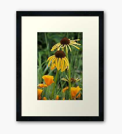 Cone Flowers & Poppies Framed Print