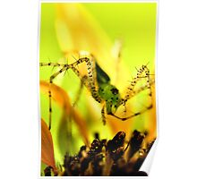 Green Lynx Spider Poster