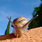 Snail by Luci Cadman